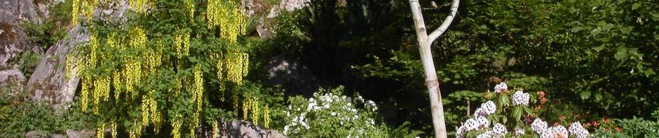 MZ Garden